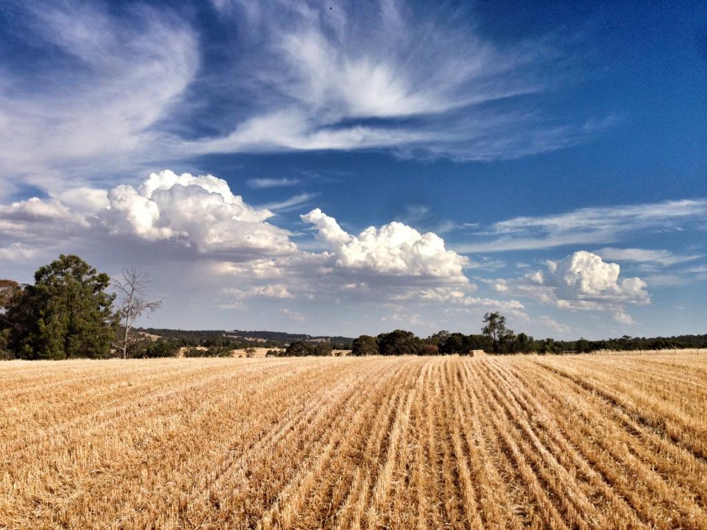 Katanning Accommodation - Harvest Time in November