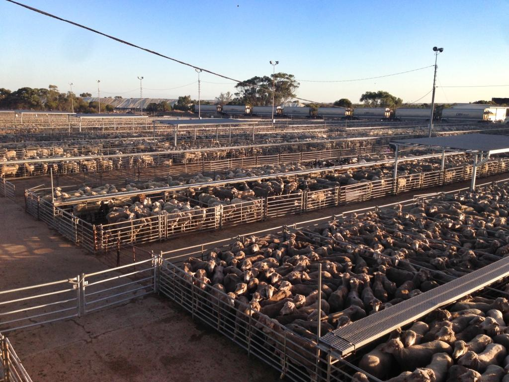Katanning Saleyards February