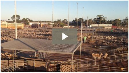 Video: Katanning Saleyards 25th Feb 14